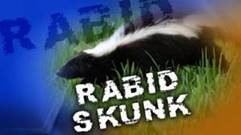Rabid Skunk Found in City
